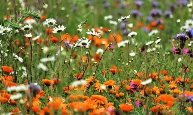 Juin 2020 – Europe : n'oublions pas la biodiversité – Michel Derdevet