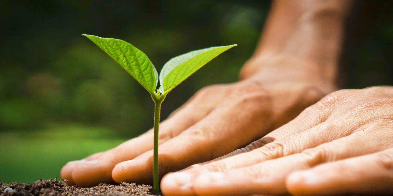 Pacte vert pour l'Europe: Stimulation de la production biologique et consultation publique sur la décarbonation du marché du gaz
