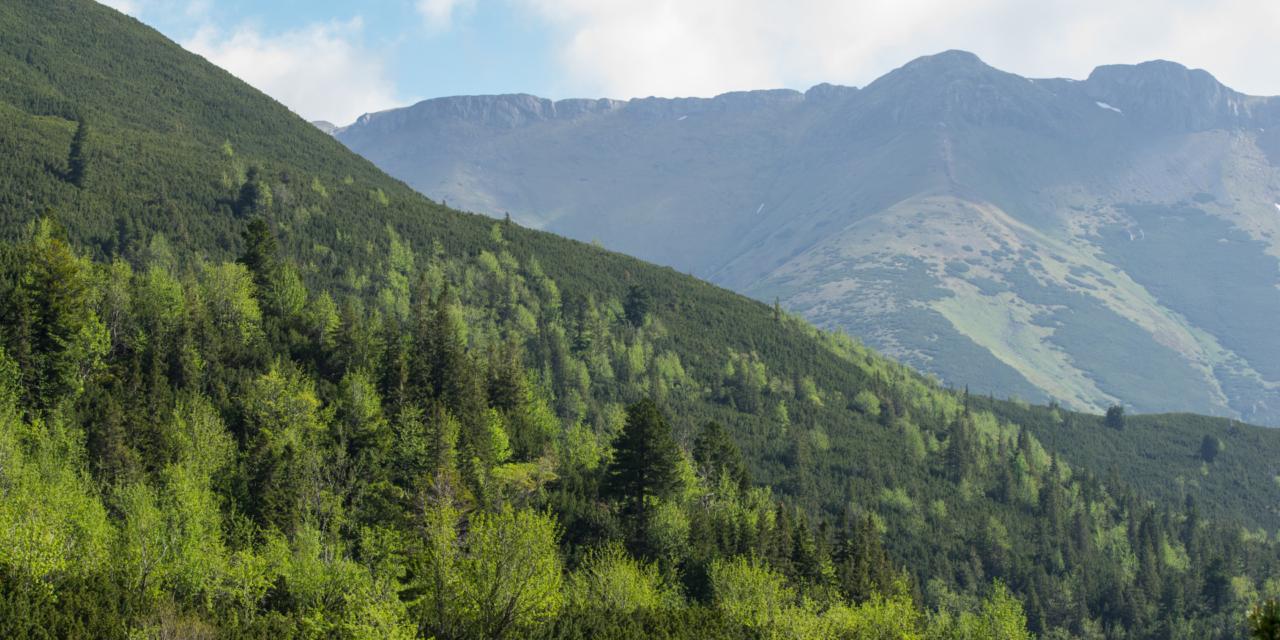 Des forêts sûres et résilientes: la Commission œuvre en faveur de la prévention des incendies de forêts en Europe et dans le monde