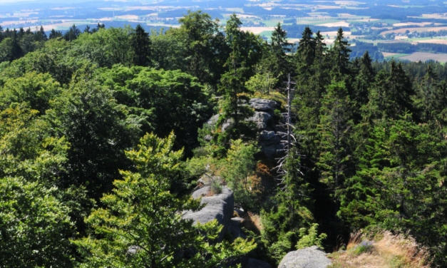 Pacte vert pour l'Europe: la Commission propose une nouvelle stratégie pour protéger et restaurer les forêts de l'UE